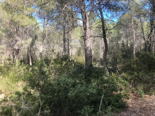 forest ibiza